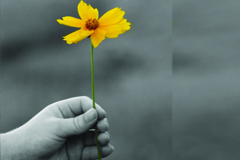 , bunga-kuning ,Saya Siap Jadi Istri Kedua