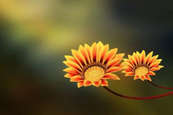 Anda Keputihan? Coba Periksa, Apakah Normal, dua-bunga ,Anda Keputihan? Coba Periksa, Apakah Normal